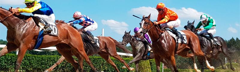 apostas em corrida de cavalos e galgos